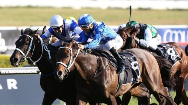 Fighting on two fronts: He's Your Man's Epsom triumph was one of four group 1 events across two states on the first ...