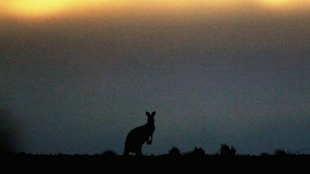 A kangaroo has attacked a woman north-west of Brisbane.