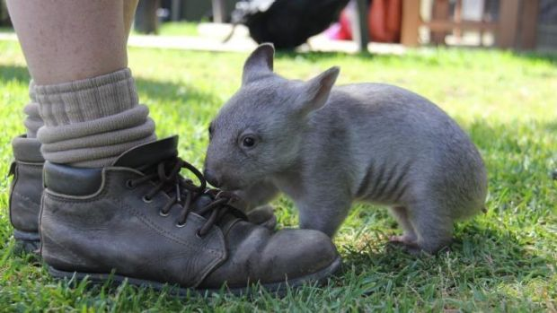 Chloe loves to chew on shoes.