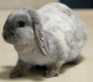 Little bugger: Flopsy, aged one, might look like a cute little rabbit but she has the potential to degrade the ...