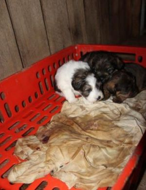 """Puppies at the """"Frazer puppy farm,"""" October 19, 2014."""