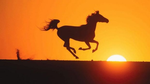 Timeless love: The Black Stallion makes a comeback in Disney's <i>The Young Black Stallion</i>.