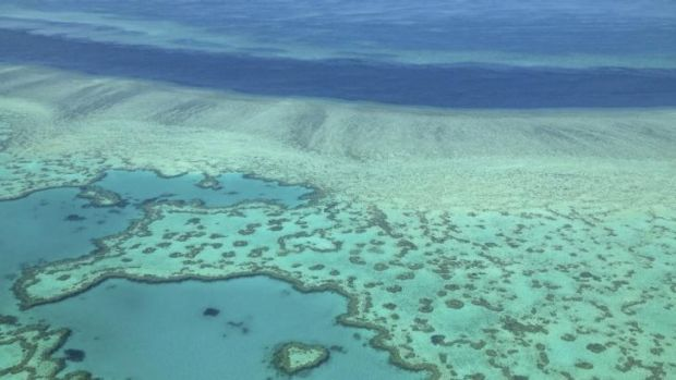 The Great Barrier Reef: One of the world's great wonders under threat.