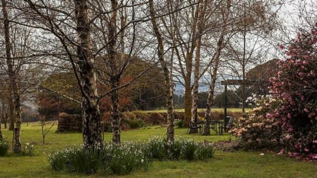 Silver birches thrive at Deborah Mullins' studio and garden, at her 16-hectare Hesket property.