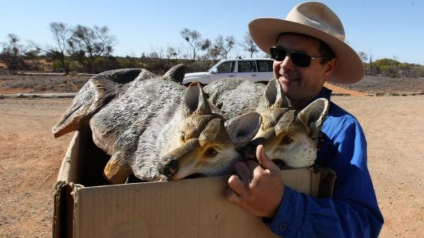 Conservation biologist Dr Mike Letnic with a box of animal decoys used to study the response of native animals.