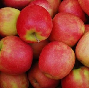Fresh trouble: Pink lady apples.