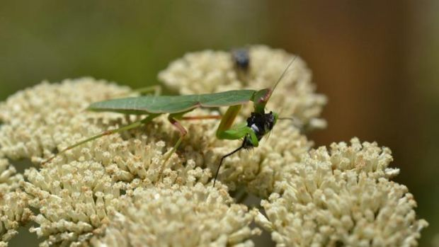 What's that bug? Bugs@home can help you ID your garden critters.