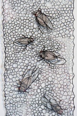 Habitus cicadas, by Sharon Peoples.
