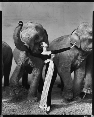 Dovima with elephants, evening dress by Dior, Cirque d'Hiver, Paris, August 1955: Avedon's fashion work for Harper's ...