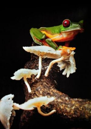 Robin Moore's book outlines his quest to find the world's rarest amphibians.
