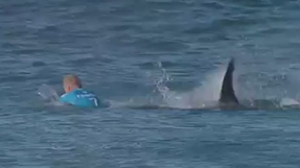 survival instinct helped mick fanning during shark attack layne beachley