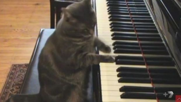 Nora the Piano Cat, one of the many stars of <i>Cats Make You Laugh Out Loud</i>.