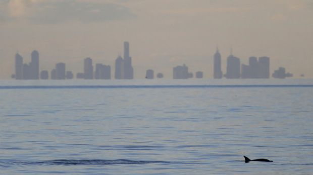 A common dolphin hunts  for lunch off Mornington. Dolphin species that traditionally live outside the bay are arriving ...