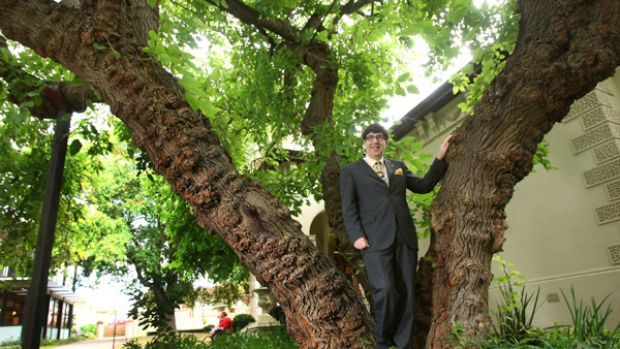 Stonnington mayor Claude Ullin stands in front of the mulberry tree in Malvern, Melbourne, which sprouted from a cutting ...