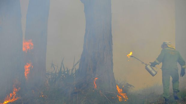 A CFA member helps carry out a burn-off yesterday in Olinda, atop the Dandenong Ranges.