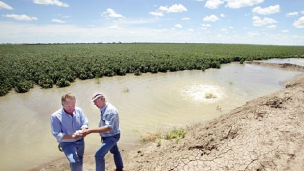 Cottoning on ... the joint managers of Cubbie Station, Paul Brimblecombe and John Grabbe, examine some of their crops.