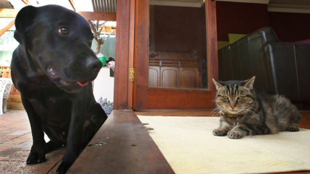 Rufus the dog and Murphy the cat.