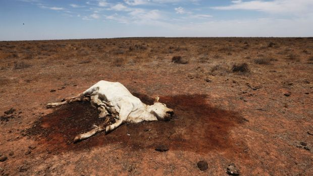 Drought is returning to large parts of inland Queensland and NSW.
