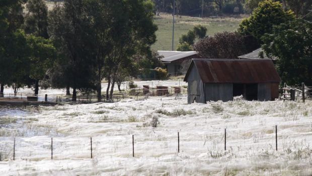 A home surrounded by spiderwebs as floodwaters rise around Wagga Wagga in 2012.