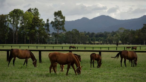 Two stud farms close to Anglo American's Drayton operations in the Hunter Valley have stymied that mine's development.