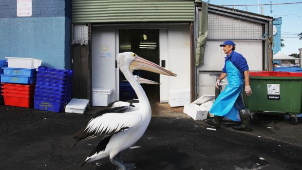 Chinese fishing and real estate conglomerate Dahua already owns a 25 per cent stake in Sydney Fish Markets, now it wants ...