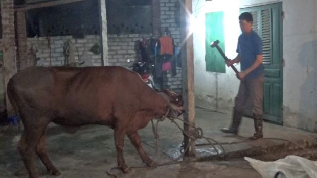Animals Australia has included this photograph, taken inside a Vietnamese abattoir last month, in its complaint to the ...