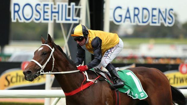 Saturday success: Jim Cassidy rides Press Statement to win the TAB Place Multi Plate at Rosehill.