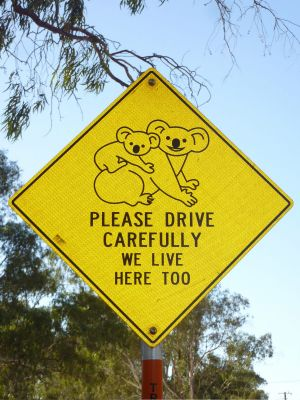 Narrandera supposedly has a significant population of koalas.
