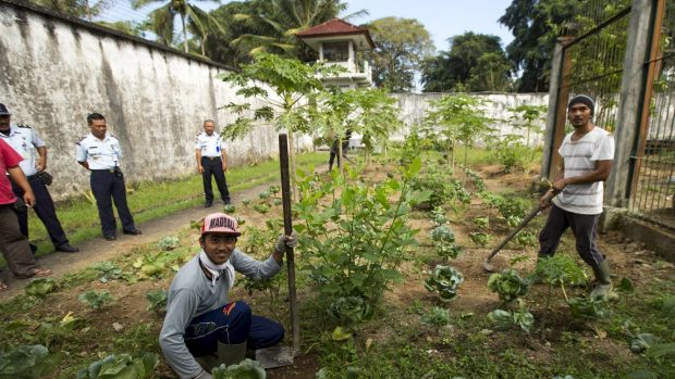 The prison garden supplying organic ingredients to bali 39 s healthy eateries - Gardening in prisons plants and social rehabilitation ...