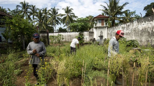 The IDEP Foundation sells produce from the prison garden to restaurants including Ubud Deli, Bali Buda, Pizza Bagus and ...