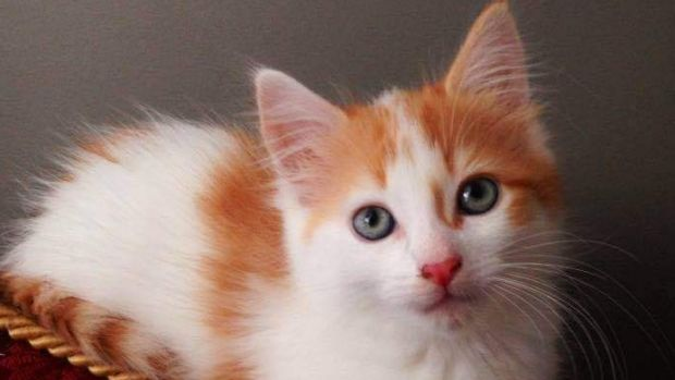 Brisbane cat lovers could soon have a cat cafe to go to for a sip and a pat.