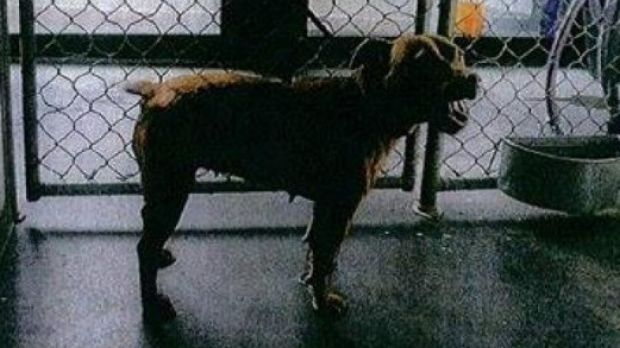 'Death-row dog' Izzy has been held by the RSPCA for two years.