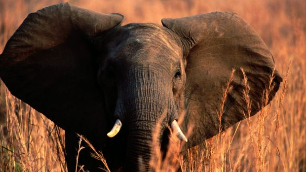 Poachers have become increasingly desperate and violent in Africa.