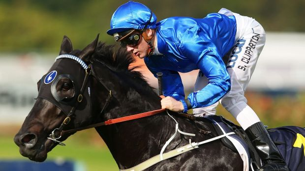 Golden Rose?: Trainer John O'Shea is yet to settle on a road ahead for Shards.