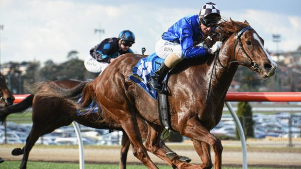 Glen Boss rides Wild Rain to victory in the Pantry Packer Handicap at Moonee Valley on Sunday.