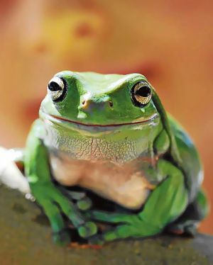 A green tree frog who took part in the census.