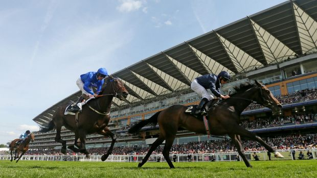 Ascot success: Curvy scored another win for super stallion Galileo with a win in the Ribblesdale Stakes at Royal Ascot.