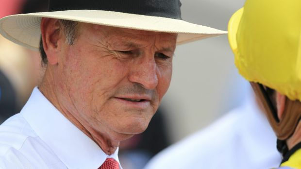 Let the horses decide: David Payne is backing French Fern to perform well at Canterbury.