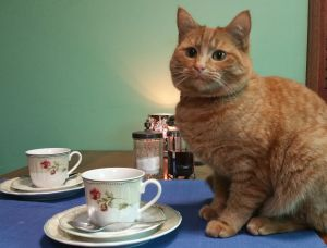 Julia Gillard the cat, set to be part of Canberra's first cat cafe.