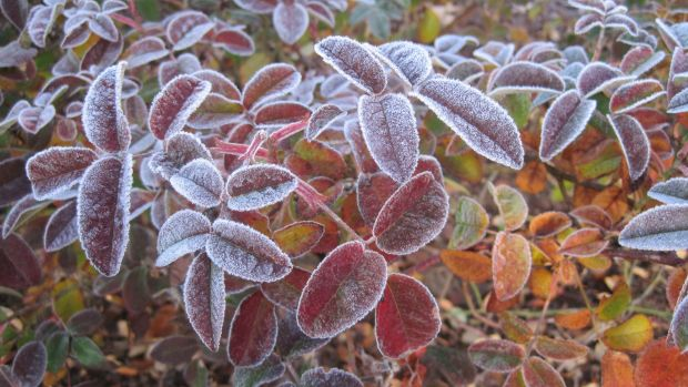 Frosty times ahead: The first of the fronts should arrive on Thursday.
