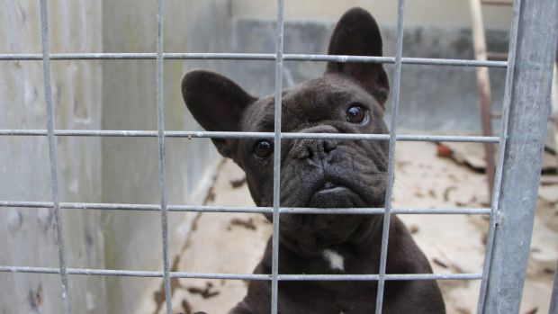 pet industry s top dogs overlooked puppy factory cruelty