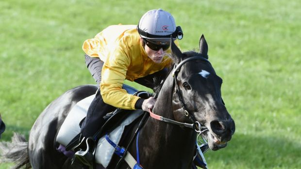 Confident: Brazen Beau will contest the July Cup at Newmarket on Sunday, Australian time, with Chris Waller's confidence ...