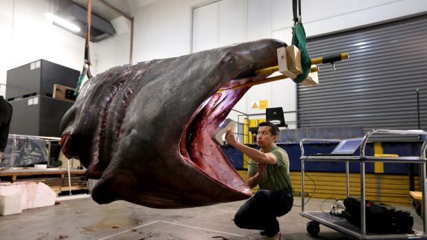 Rare Basking Shark With A Head For Science Becomes Model
