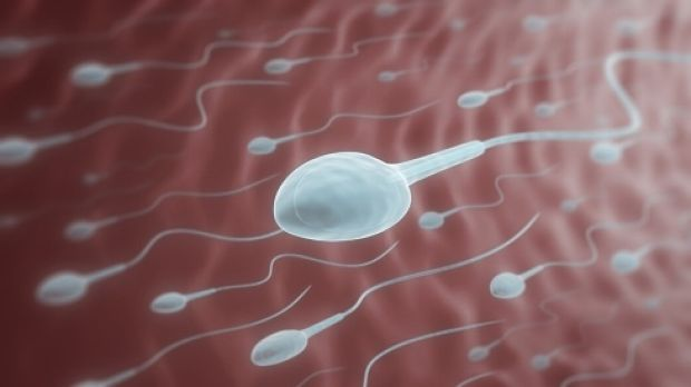 The number of pregnancies from donor sperm in Victoria have increased 67 per cent on five years ago's figures.
