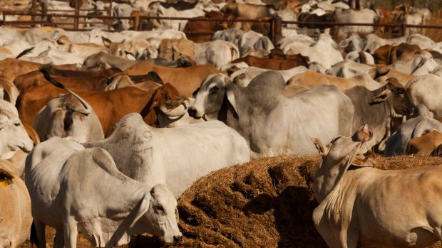 Agriculture Minister Barnaby Joyce estimates the deal with China is potentially worth between $1 billion to $2 billion a ...
