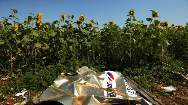 Sunflowers surround the MH17 crash site in East Ukraine.