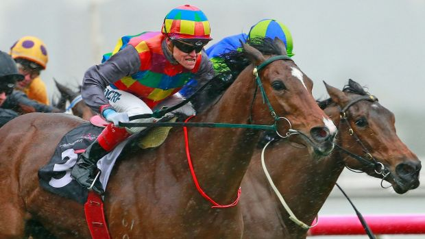 Leading the way: Craig Williams steers Jessy Belle to victory at Flemington on Saturday.