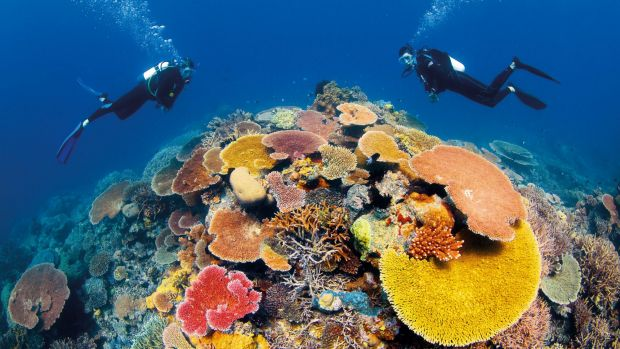 Diving in The Great Barrier Reef.