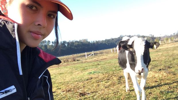 Alexandra Green, a 21-year-old honours student at Sydney University, developed a test to see if cows could follow sound ...