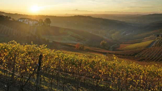 Temperature increases mean vineyards are popping up in unexpected places.